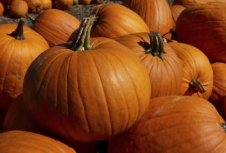 How to Keep a Pumpkin From Rotting so it Lasts All Season