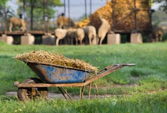 Poop for Profit? How to Sell Manure
