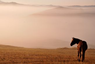 Buying a Horse Checklist: 11 Must-Know Tips