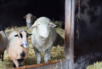 Antibiotic Use in Livestock Feed