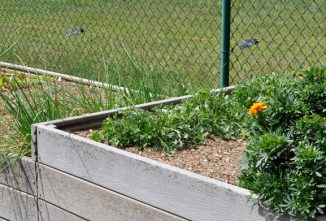 A Guide to Raised Bed Gardening