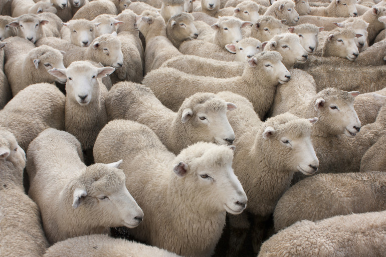 14 Ways to Cut Costs on the Sheep Farm