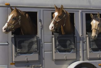 How to Pick a Good Used Livestock Trailer