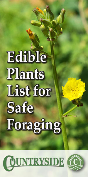 This image has an empty alt attribute; its file name is EdiblePlantsListSafeForaging-300x600.jpg