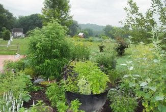 Growing the Best Herbs for Containers