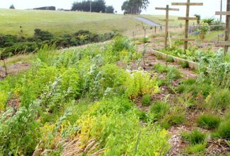 5 Tips to Developing a Permaculture Food Forest