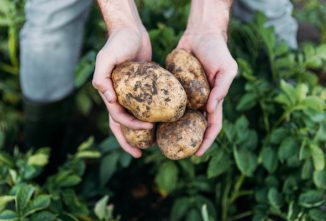 Growing Your Own Spuds