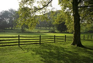 Homesteading After Retirement: Part 2