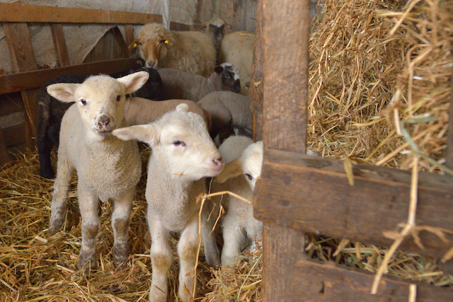 Homesteading After Retirement: Part 4