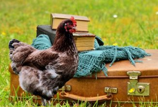 Homesteading After Retirement: Part 5