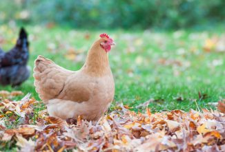 Fall Poultry Giveaway – More Than $1,500 Worth of Prizes!